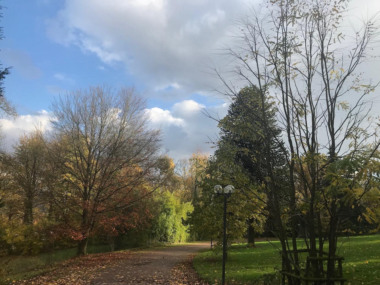 An autumn scene at the Rheinaue, the State park in Bonn, Germany where COP23 was held